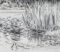 Reeds and Reflections web